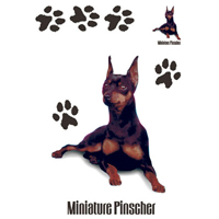 Cachorro Miniature Pinscher - Adulto - 6 Unid.