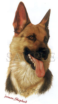 Cachorro German Shepherd - Adulto - 6 Unid.